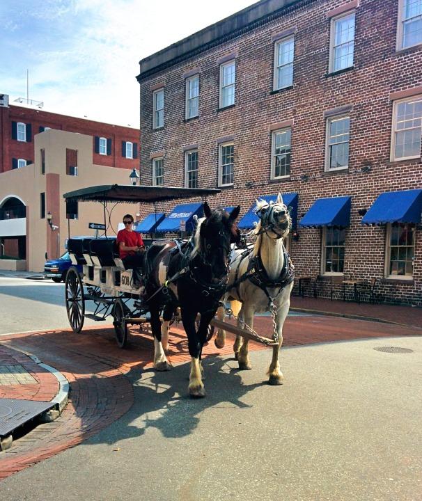 Savannah_horse_carriage